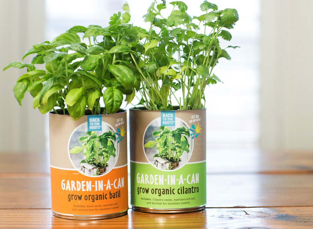 Busy stocked foods herb garden