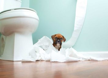 Bathroom toilet paper and dog